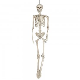 Squelette 160 cm