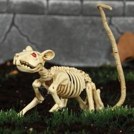 Squelette de Rat 20 cm