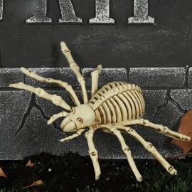Squelette d'Araignée 24 cm