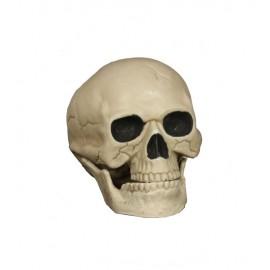 Crâne 20 cm