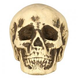 Crâne 22 cm en Mousse