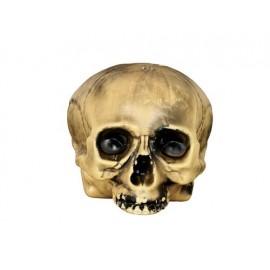 Crâne sans Menton 20 cm en Plastique