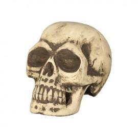 Crâne 32 cm en Mousse