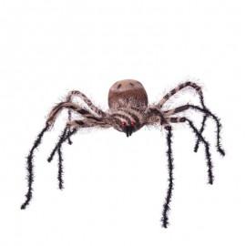 Grande Araignée Zébrée