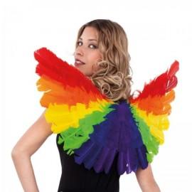 Ailes Multicolores