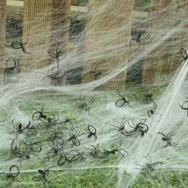 Pack de 50 araignées