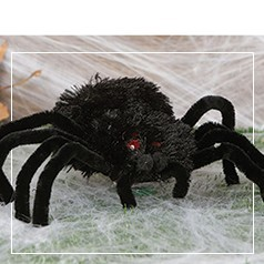 Araignées Halloween